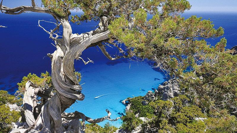 сардиния италия море хвойное дерево